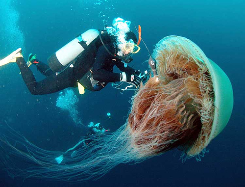 meduzos-gaudymas